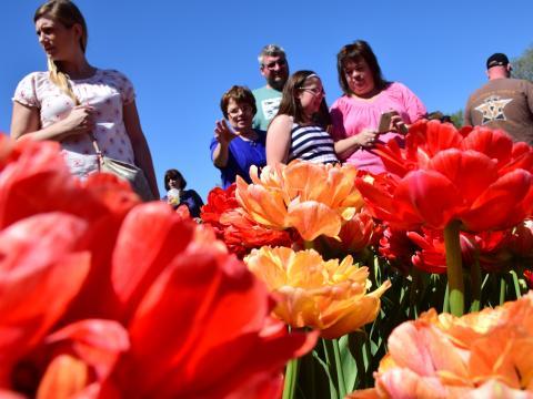 在奥尔巴尼郁金香节上观赏缤纷花朵的游客