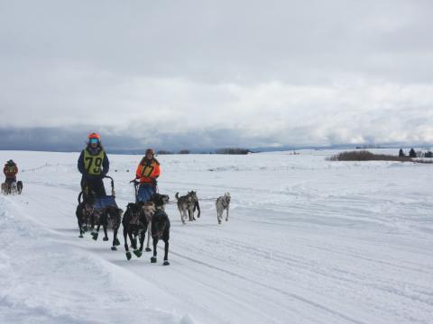 爱达荷州 American Derby Dog 狗拉雪橇比赛中的竞技者